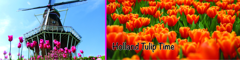 Holland Tulip web banner